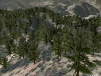 2000 trees in Google Earth